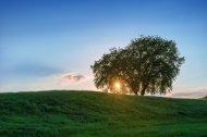 Fototapeta, łąka